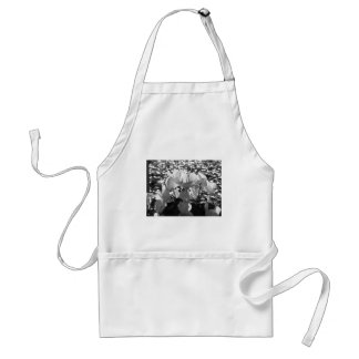 Backlits white cyclamen flowers on dark background standard apron
