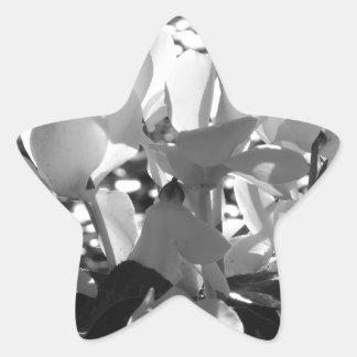 Backlits white cyclamen flowers on dark background star sticker