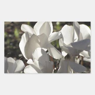 Backlits white cyclamen flowers on dark background sticker
