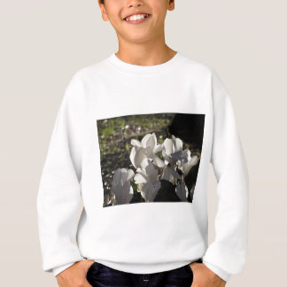 Backlits white cyclamen flowers on dark background sweatshirt