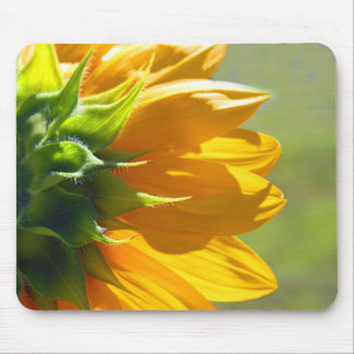 Backside of sunflower. mousepad