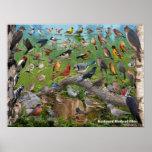 Backyard Birds of Ohio Poster