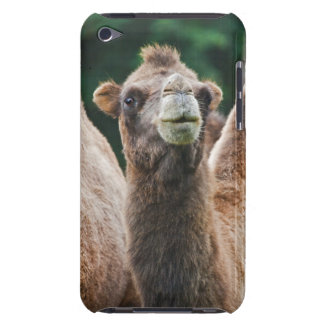 Bactrian Camel iPod Touch Case