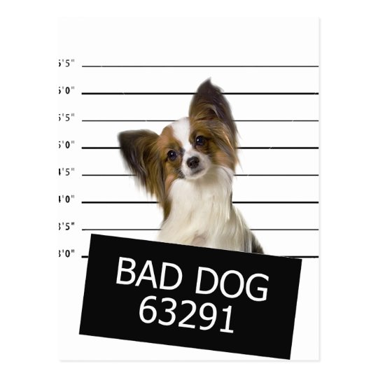 Bad dog postcard