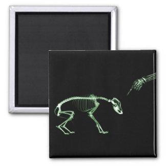 Bad Dog X-ray Skeleton in Green Square Magnet