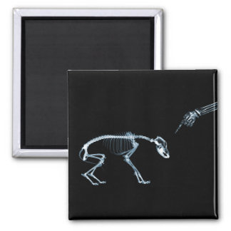 Bad Dog Xray Skeleton Black Blue Magnet