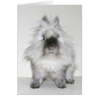 Bad hair day bunny card