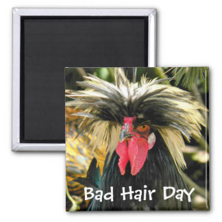 Bad Hair Day Chicken Photo Square Magnet