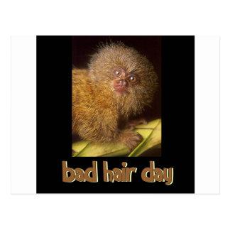 Bad Hair Day Marmoset Postcard