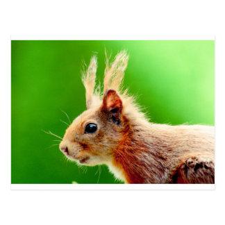 Bad hair day squirrel postcard