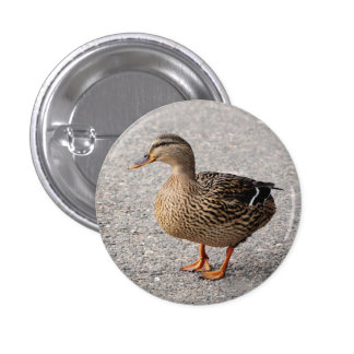 Badge with duck 1 inch round button