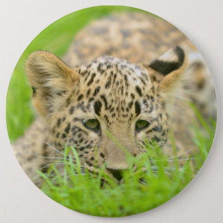 Badge with young Leopard 6 Inch Round Button