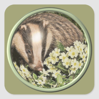 Badger on the Primrose Bank Square Sticker