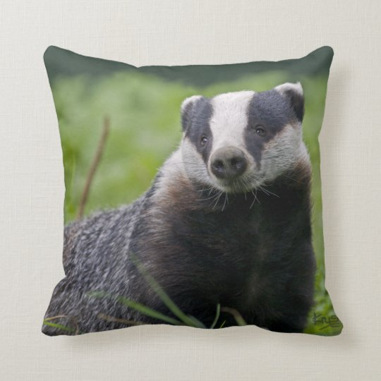 Badger Pillow