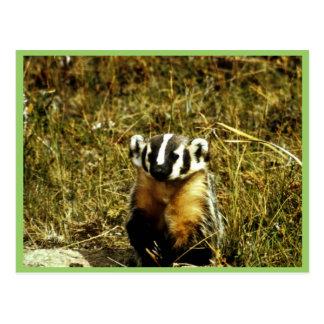 Badger Postcard