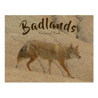 Badlands National Park Coyote Postcard