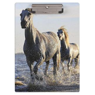 Baeutiful Horse Photo Clipboard