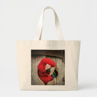 Bag with green wing macaw parrot in barrel
