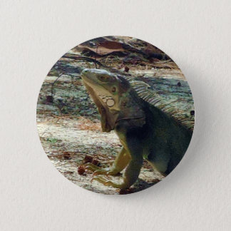 Bahama Iguana Button