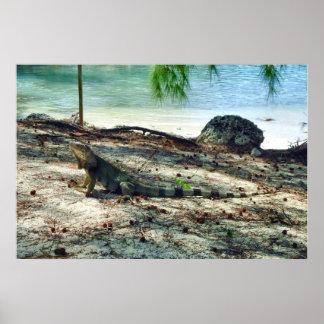Bahama Iguana Poster