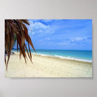 Bahamas Beach and Palm Tree Poster