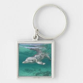 Bahamas, Grand Bahama Island, Freeport, Captive 5 Silver-Colored Square Keychain