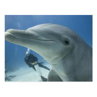 Bahamas, Grand Bahama Island, Freeport, Scuba 2 Postcard