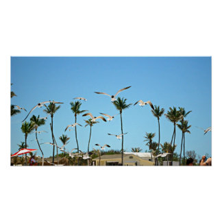 Bahamas Seagulls flying over blue skies - Poster