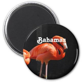 Bahamian Flamingo Magnet