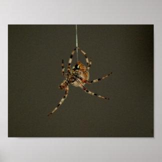 Baisse d'araignée affiche