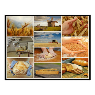 Bake bread wheat pastries dough collage postcard