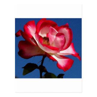 balboa-park-roses PS LARGE.jpg Postcard