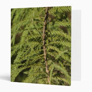 Bald Cypress Branch 3 Ring Binder