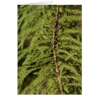 Bald Cypress Branch Card