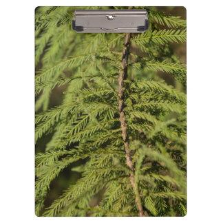 Bald Cypress Branch Clipboard