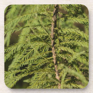 Bald Cypress Branch Coaster