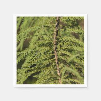 Bald Cypress Branch Napkin