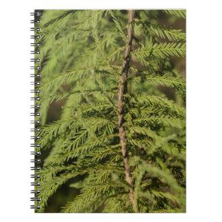 Bald Cypress Branch Notebook