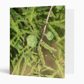 Bald Cypress Seed Cone Binder