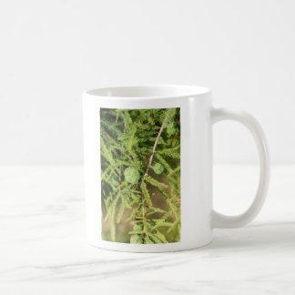 Bald Cypress Seed Cone Coffee Mug