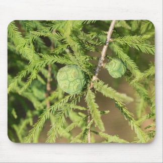 Bald Cypress Seed Cone Mouse Pad