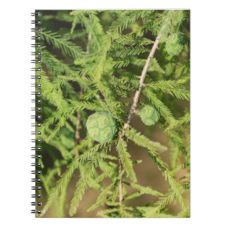Bald Cypress Seed Cone Notebooks