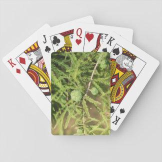 Bald Cypress Seed Cone Poker Deck