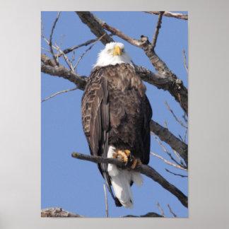 Bald Eagle 2010 Poster