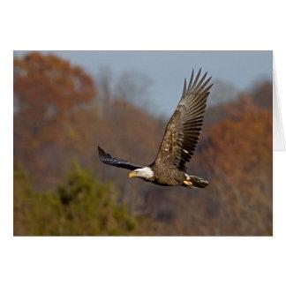 Bald Eagle 6 Card