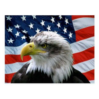 Bald Eagle American Flag Postcard