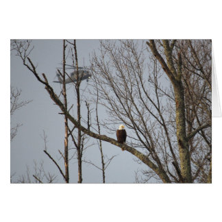 Bald Eagle and Blackhawk Notecard - Blank Inside