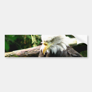 Bald Eagle Bumper Sticker