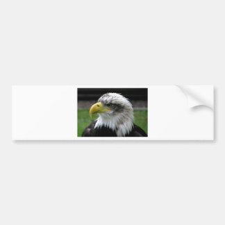 bald-eagle bumper sticker