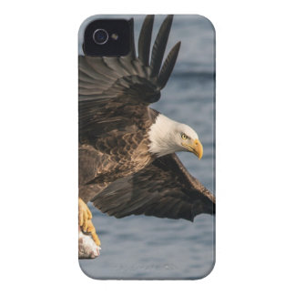 Bald Eagle Catching Food iPhone 4 Cover
